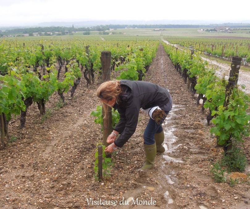 Vigneronne du Château d'Yquem, LVMH