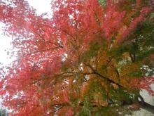 2016-11-24-kyoto-12-temple-sanjusangen-do