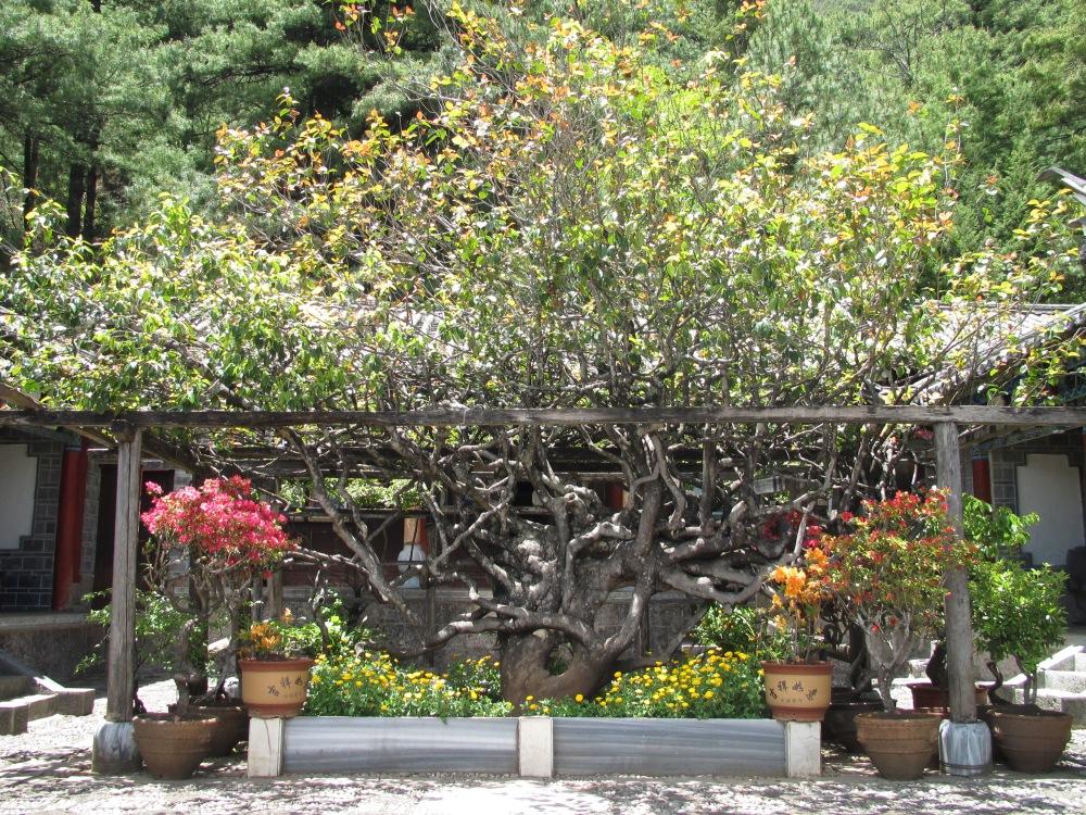 Temple du sommet de jade, Lijiang, Yunnan, Chine