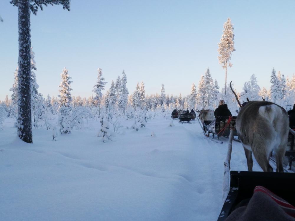 Laponie - Balade en renne de traineau à Jaakkola Reindeer Farm