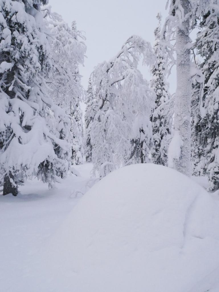 Laponie - Fourmilière enneigée