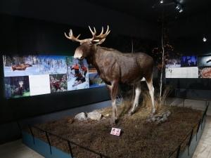 Laponie - Arktikum élan