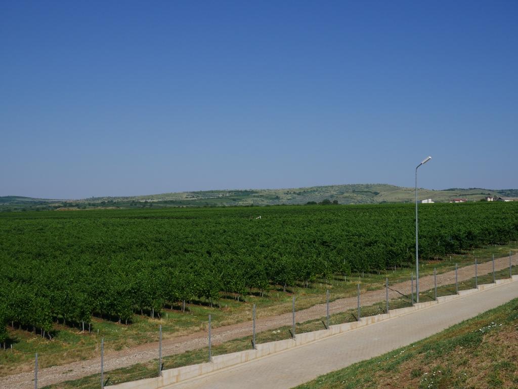 Roumanie - Vignoble Budureasca