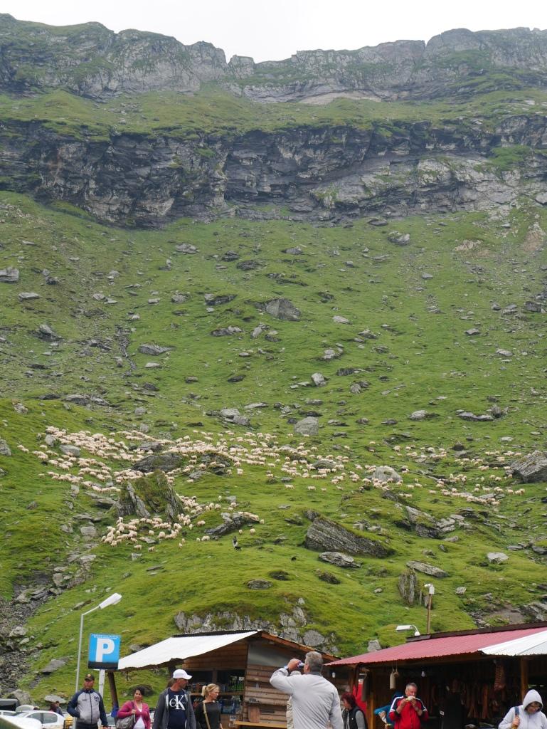 Roumanie - Lac Bâlea et ses moutons